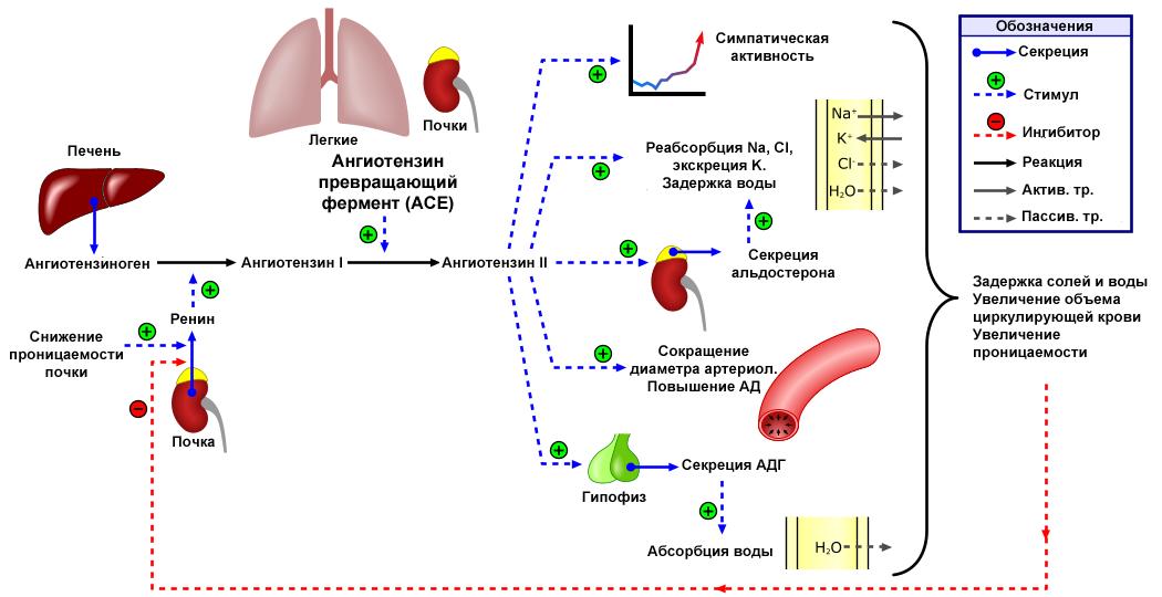 magas vérnyomás krízissel a hipertónia okainak és kezelésének új pillantása