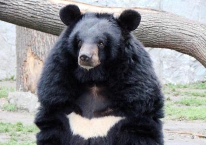 Medvehagyma cseppek 30 ml Gerani - magas vérnyomás
