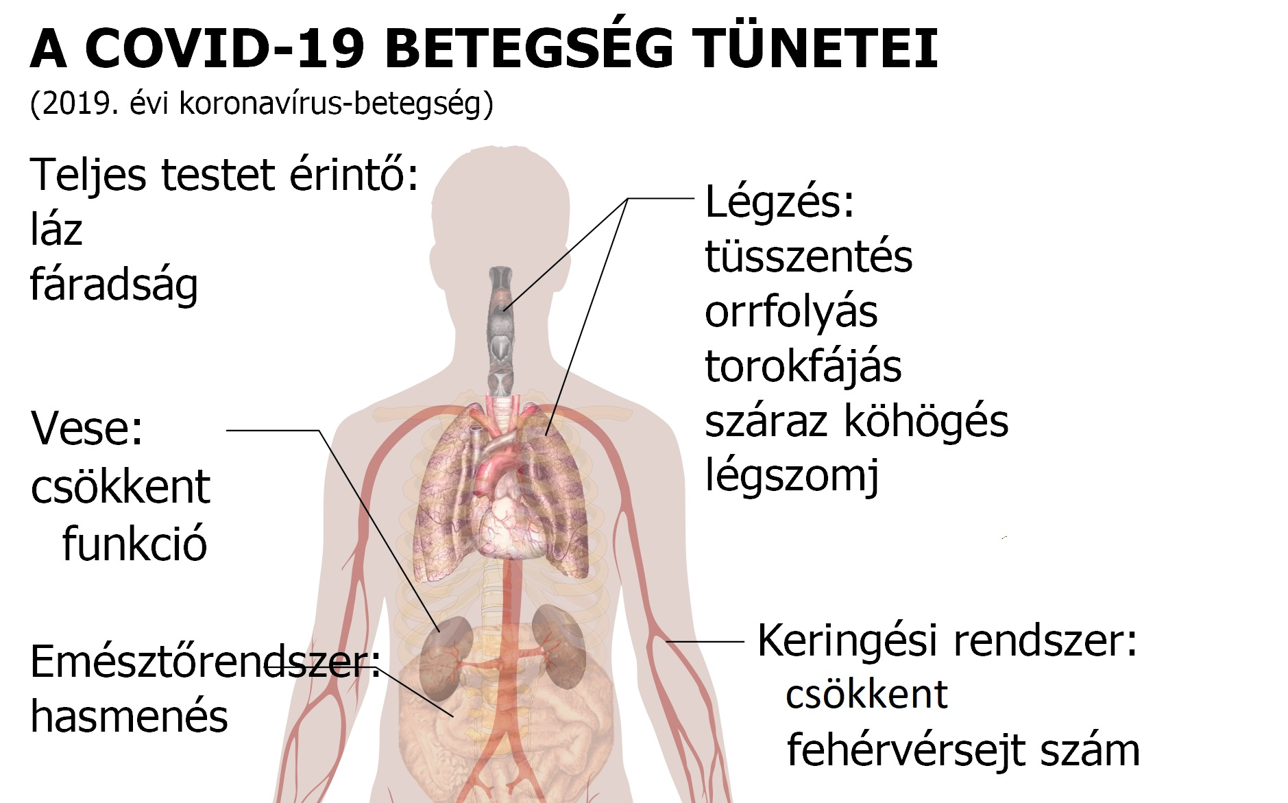 mi okozza a magas vérnyomással járó köhögést