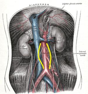 aorta aneurysma hipertónia alkalmas-e első fokú magas vérnyomás esetén